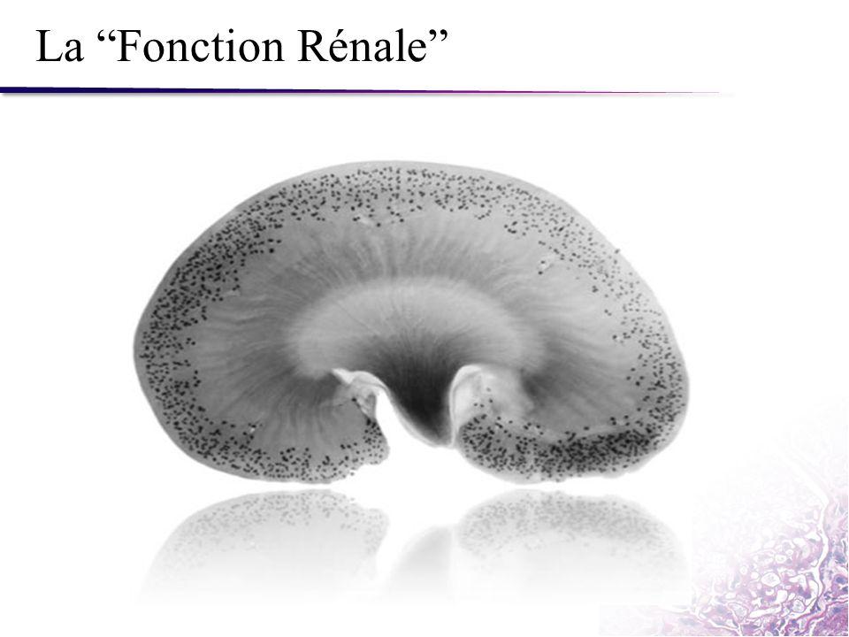 """La """"Fonction Rénale"""""""