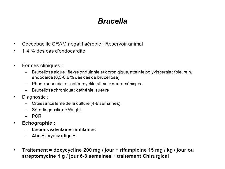 Brucella Coccobacille GRAM négatif aérobie ; Réservoir animal 1-4 % des cas d'endocardite Formes cliniques : –Brucellose aiguë : fièvre ondulante sudo