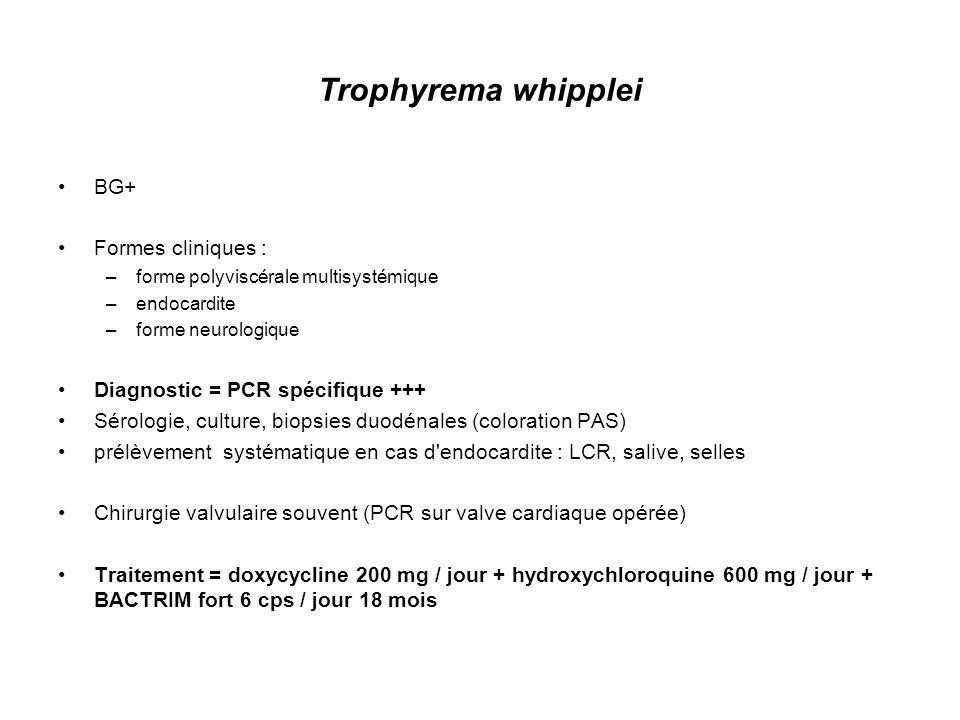 Brucella Coccobacille GRAM négatif aérobie ; Réservoir animal 1-4 % des cas d endocardite Formes cliniques : –Brucellose aiguë : fièvre ondulante sudoroalgique, atteinte polyviscérale : foie, rein, endocarde (0,3-0,6 % des cas de brucellose) –Phase secondaire : ostéomyélite,atteinte neuroméningée –Brucellose chronique : asthénie, sueurs Diagnostic : –Croissance lente de la culture (4-6 semaines) –Sérodiagnostic de Wright –PCR Echographie : –Lésions valvulaires mutilantes –Abcès myocardiques Traitement = doxycycline 200 mg / jour + rifampicine 15 mg / kg / jour ou streptomycine 1 g / jour 6-8 semaines + traitement Chirurgical