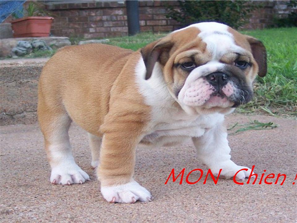 MON Chien !!!!!!!!!