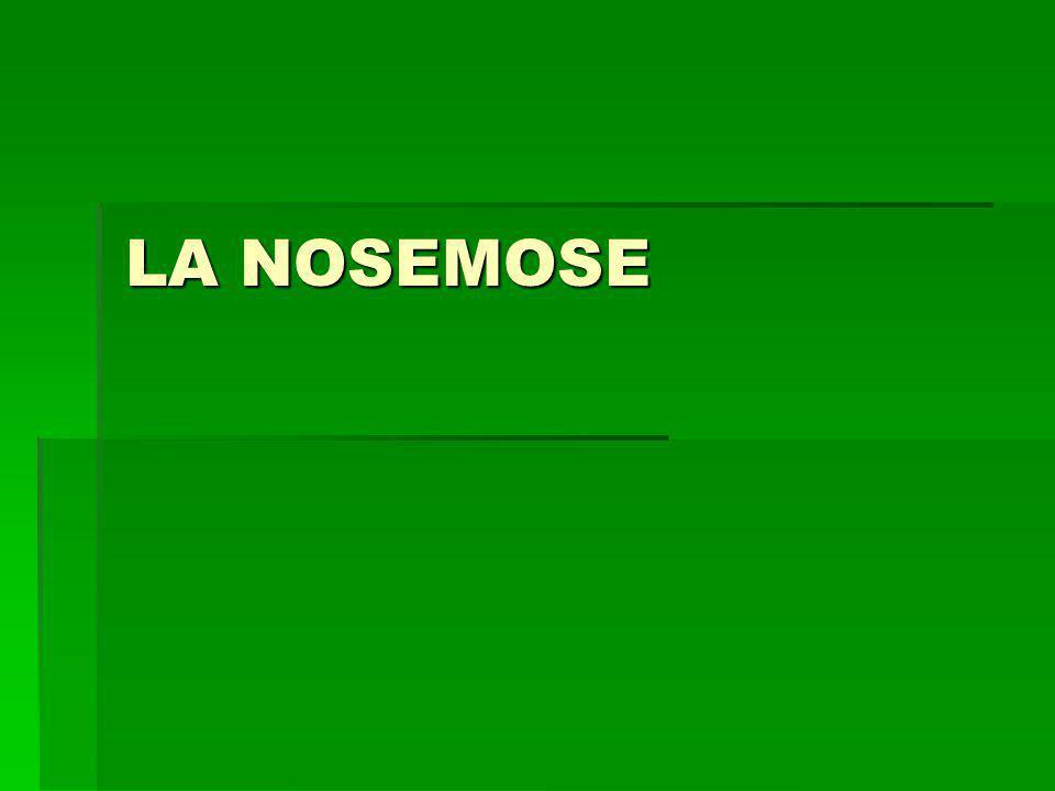 LA NOSEMOSE