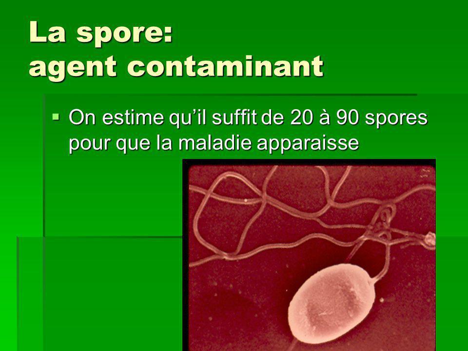 La spore: agent contaminant  On estime qu'il suffit de 20 à 90 spores pour que la maladie apparaisse