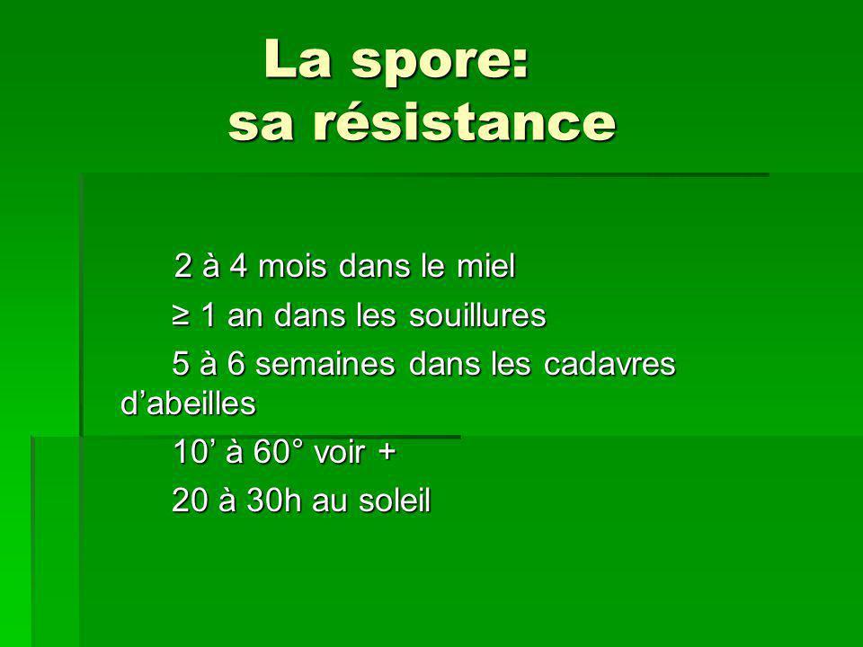 La spore: sa résistance La spore: sa résistance 2 à 4 mois dans le miel ≥ 1 an dans les souillures ≥ 1 an dans les souillures 5 à 6 semaines dans les