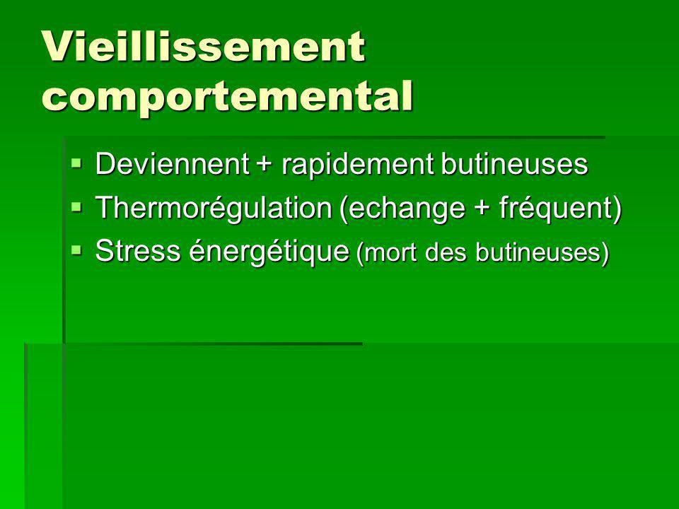 Vieillissement comportemental  Deviennent + rapidement butineuses  Thermorégulation (echange + fréquent)  Stress énergétique (mort des butineuses)