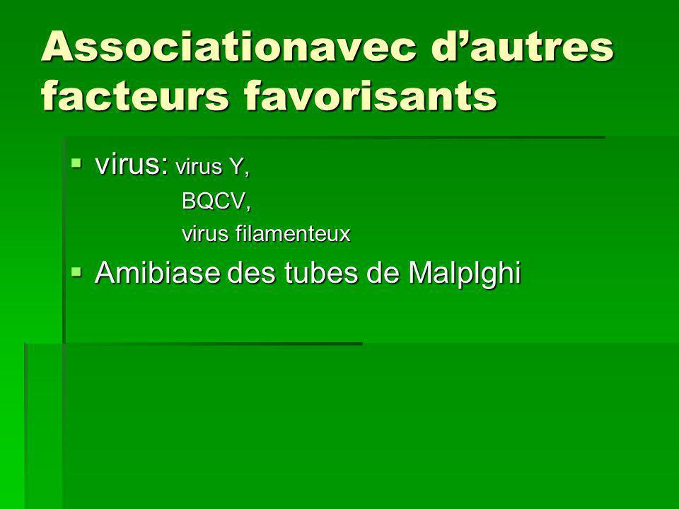 Associationavec d'autres facteurs favorisants  virus: virus Y, BQCV, BQCV, virus filamenteux virus filamenteux  Amibiase des tubes de Malplghi