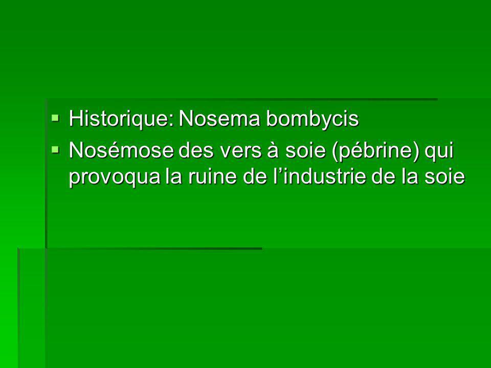 Historique: Nosema bombycis  Nosémose des vers à soie (pébrine) qui provoqua la ruine de l'industrie de la soie
