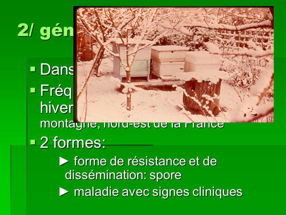 2/ généralités  Dans le monde entier  Fréquente dans les zones aux hivers froids et humides: zone de montagne, nord-est de la France  2 formes: ► f