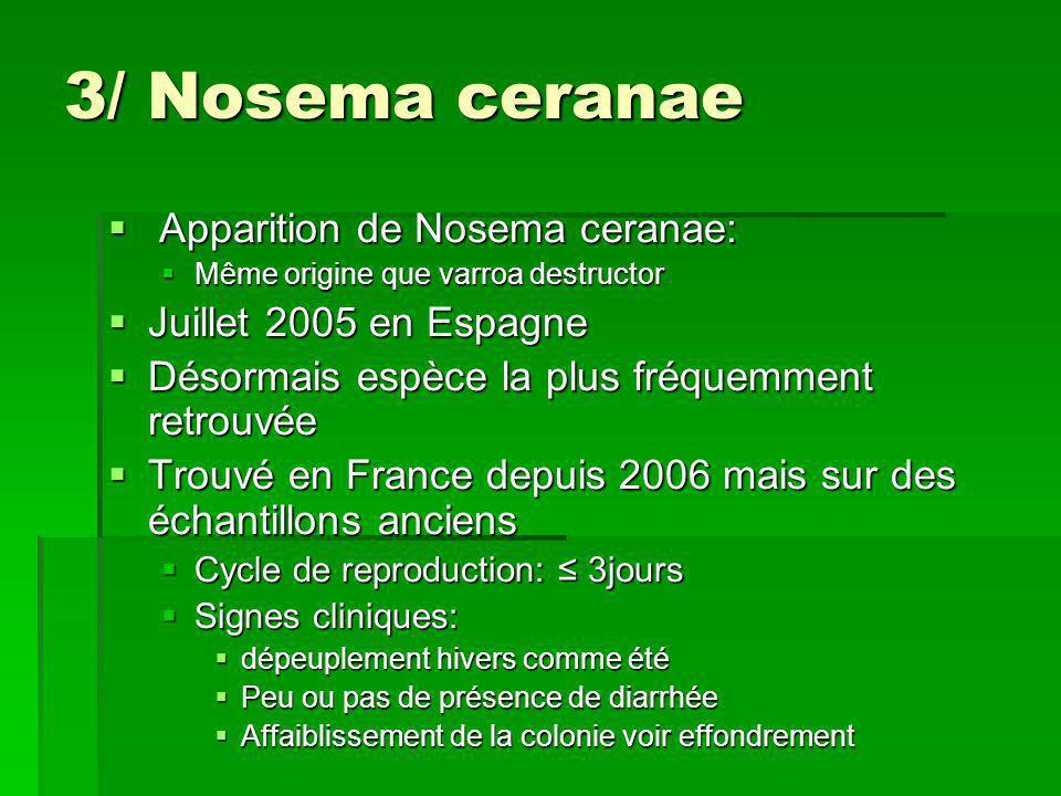 3/ Nosema ceranae  Apparition de Nosema ceranae:  Même origine que varroa destructor  Juillet 2005 en Espagne  Désormais espèce la plus fréquemmen