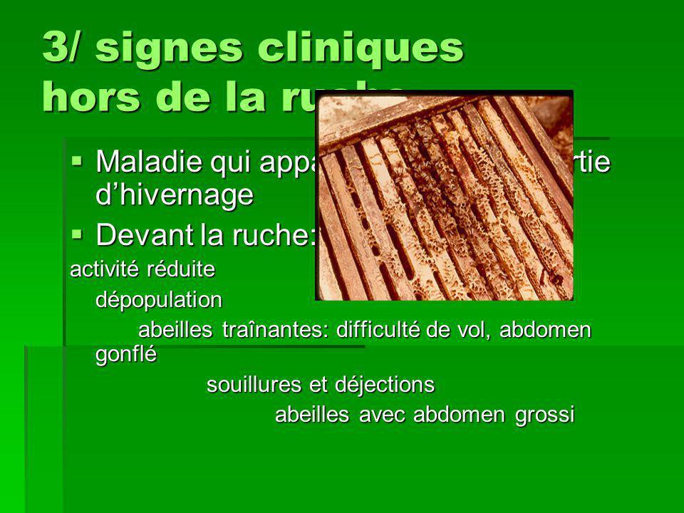 3/ signes cliniques hors de la ruche  Maladie qui apparaît souvent en sortie d'hivernage  Devant la ruche: activité réduite dépopulation abeilles tr
