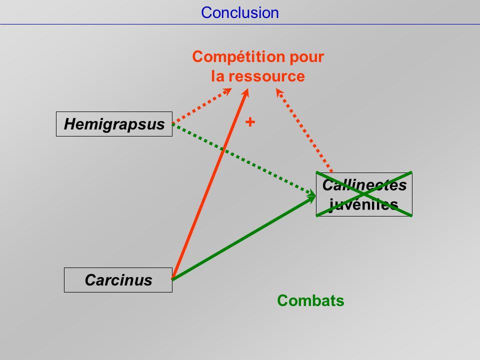 Conclusion Callinectes juvéniles Carcinus Hemigrapsus Compétition pour la ressource + Combats