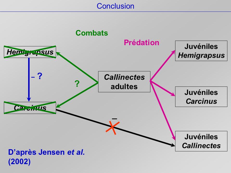 Conclusion Carcinus Hemigrapsus Callinectes adultes Combats .