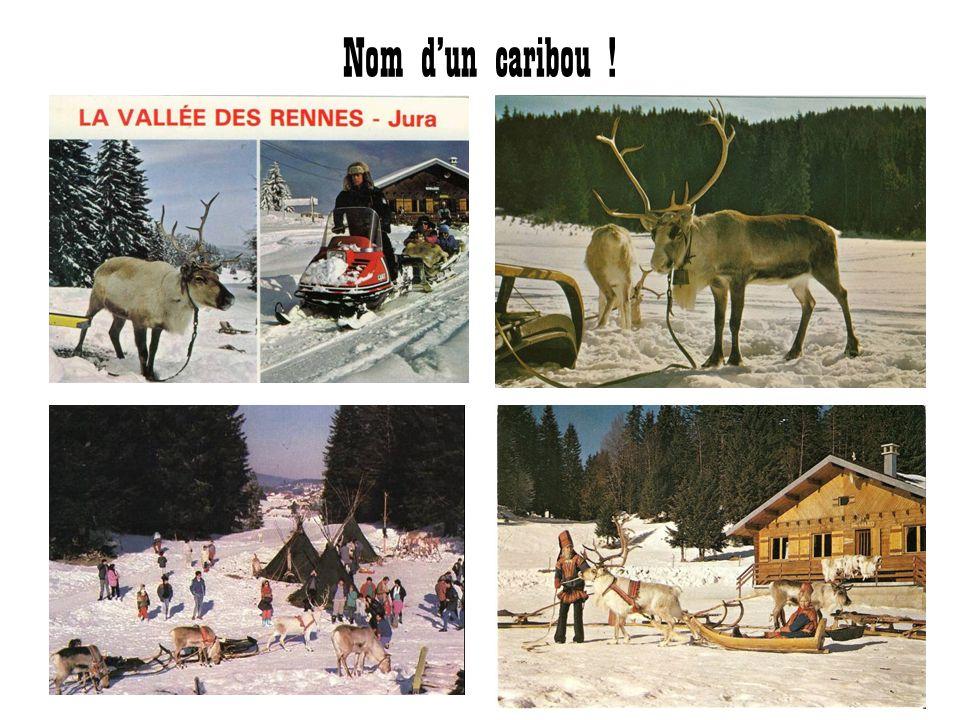 Nom d'un caribou !