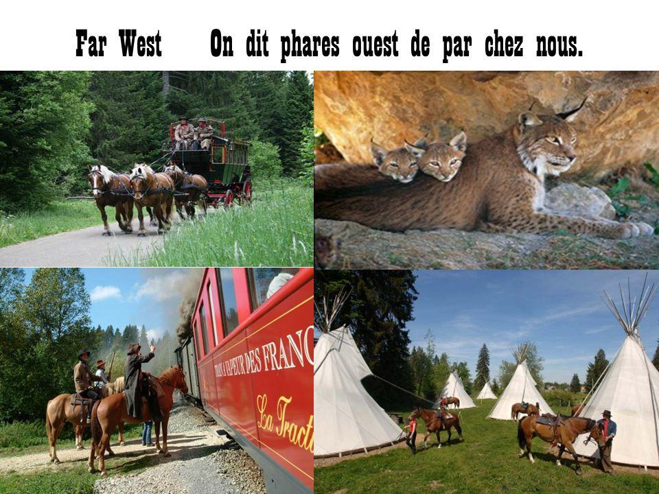 Mustangs comtois et buffalos montbéliardes