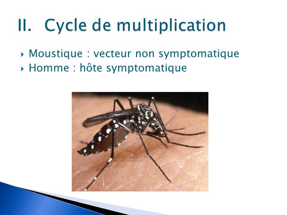  Moustique : vecteur non symptomatique  Homme : hôte symptomatique