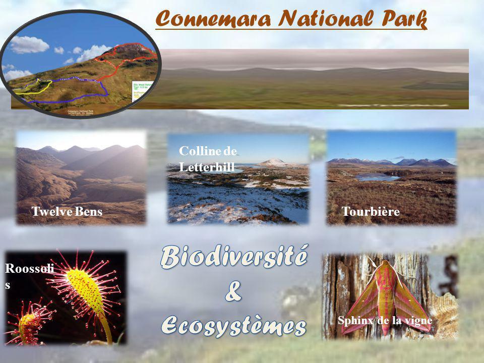 Connemara National Park Roossoli s Tourbière Sphinx de la vigne Twelve Bens Colline de Letterhill