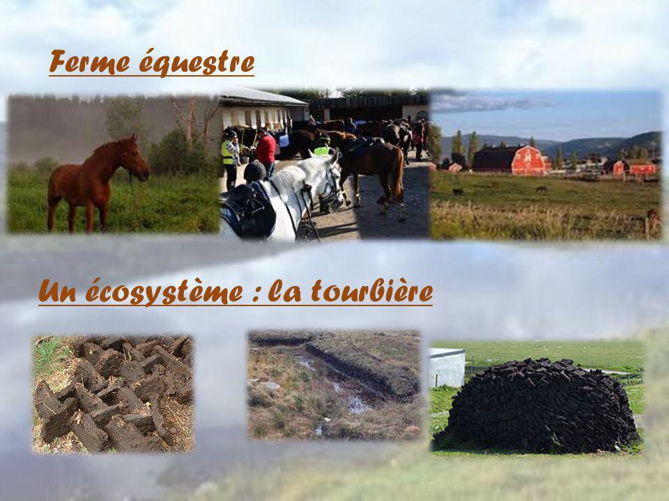 Ferme équestre Un écosystème : la tourbière