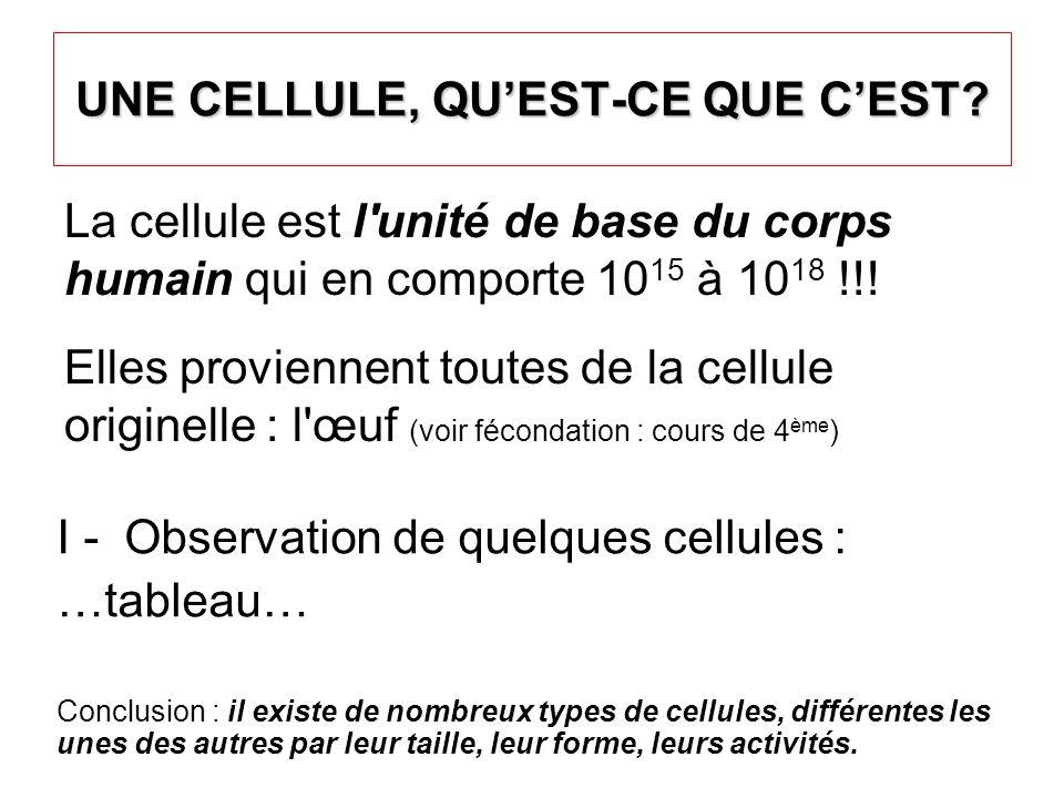 UNE CELLULE, QU'EST-CE QUE C'EST? La cellule est l'unité de base du corps humain qui en comporte 10 15 à 10 18 !!! Elles proviennent toutes de la cell