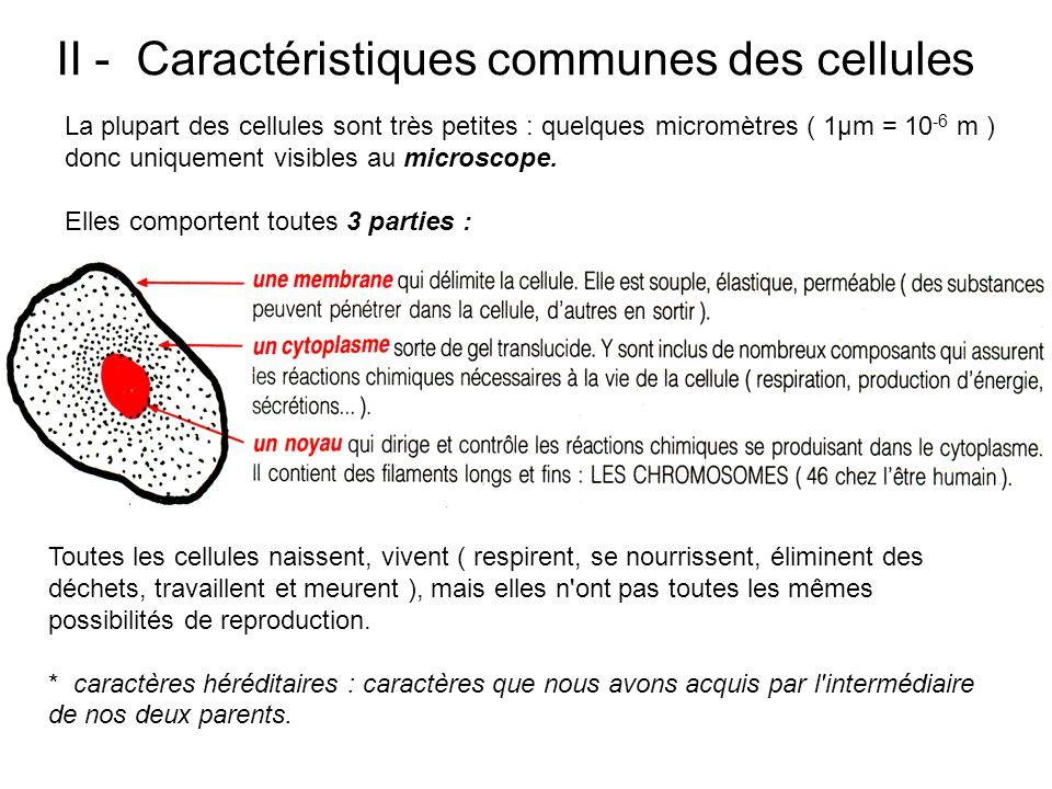 II - Caractéristiques communes des cellules La plupart des cellules sont très petites : quelques micromètres ( 1μm = 10 -6 m ) donc uniquement visible