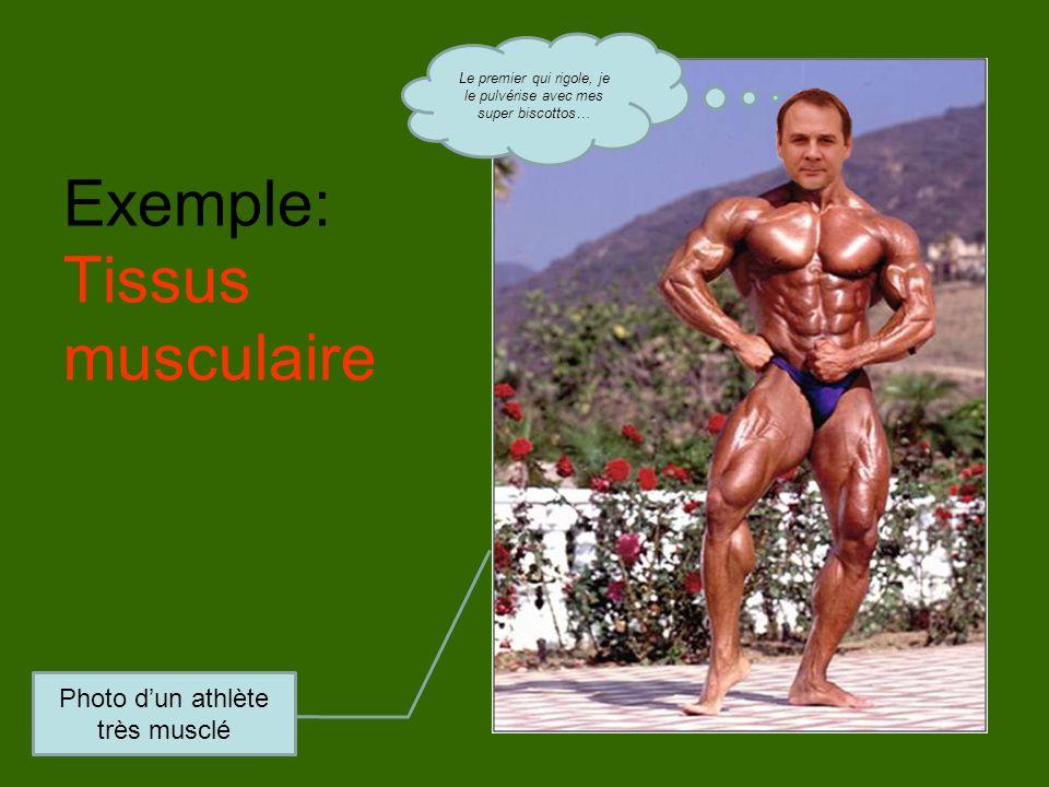 Exemple: Tissus musculaire Photo d'un athlète très musclé Le premier qui rigole, je le pulvérise avec mes super biscottos…