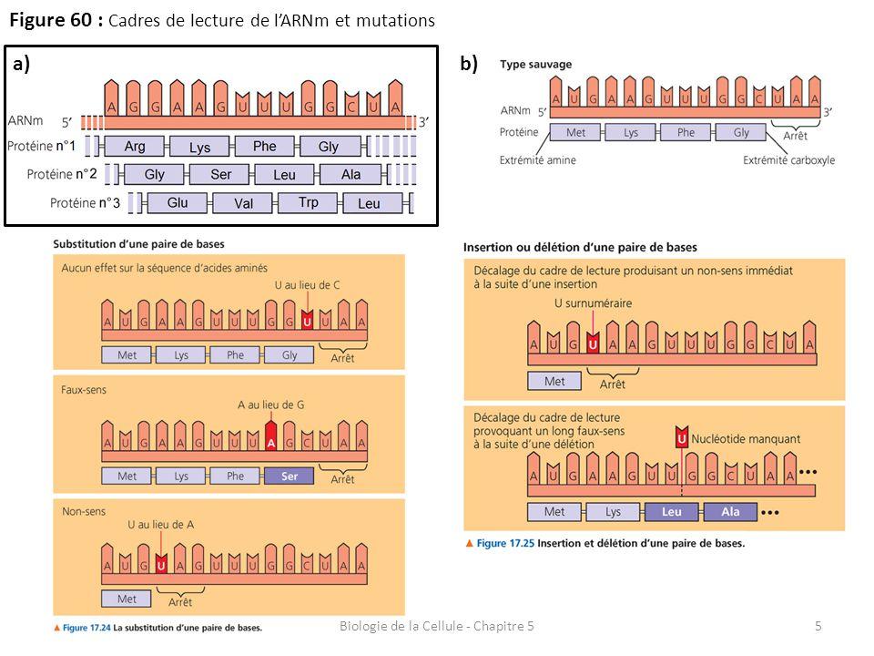 5 Figure 60 : Cadres de lecture de l'ARNm et mutations Biologie de la Cellule - Chapitre 5 a)b)