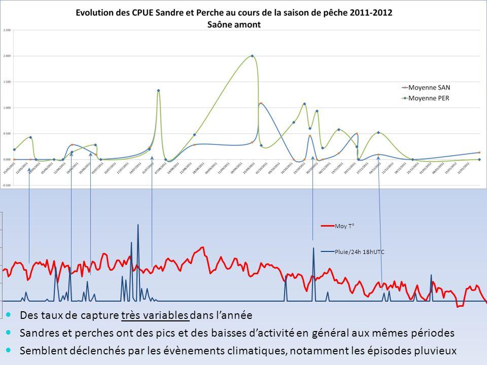 Des taux de capture très variables dans l'année Sandres et perches ont des pics et des baisses d'activité en général aux mêmes périodes Semblent décle
