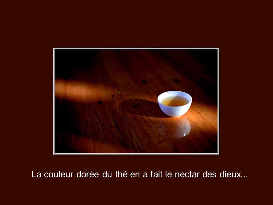 Avec ses 15,000 tasses à la seconde, le thé est la boisson la plus consommée dans le monde après l'eau. C'est aussi la boisson la plus ancienne. On bu