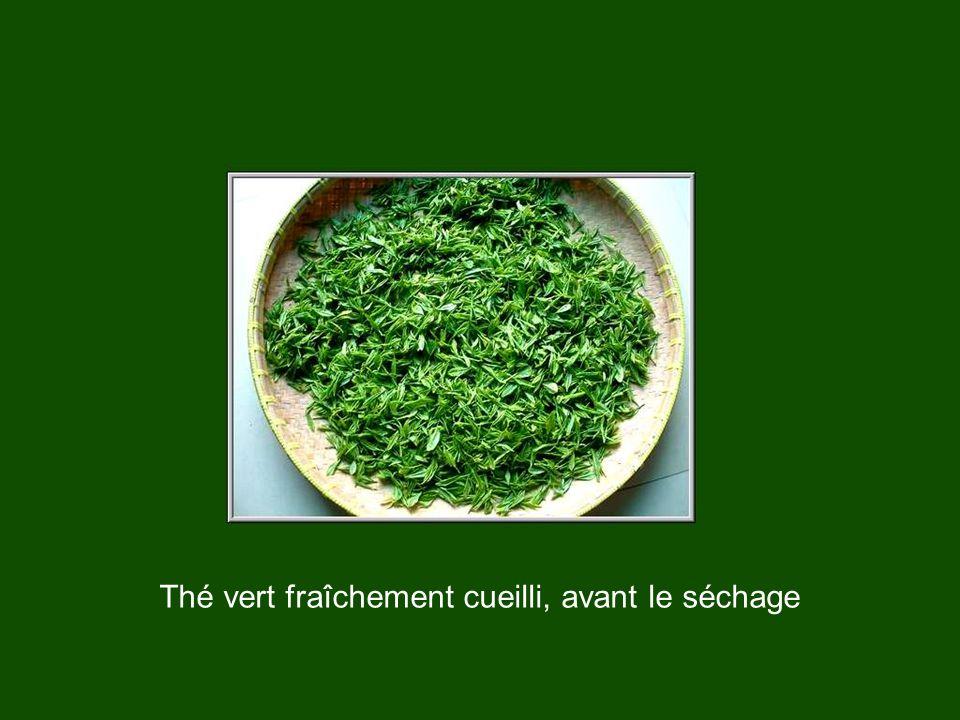 La Chine est le berceau de la civilisation du thé. D'anciens textes mentionnent le thé, notamment le Shijing (Livre des chants). L'idéogramme employé