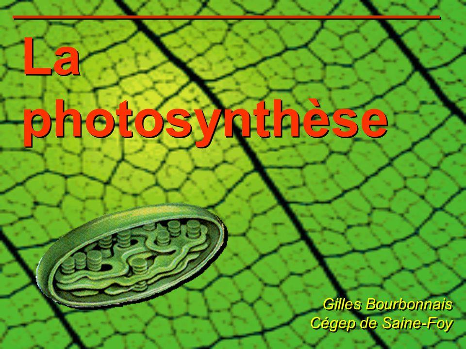 La photosynthèse Gilles Bourbonnais Cégep de Saine-Foy