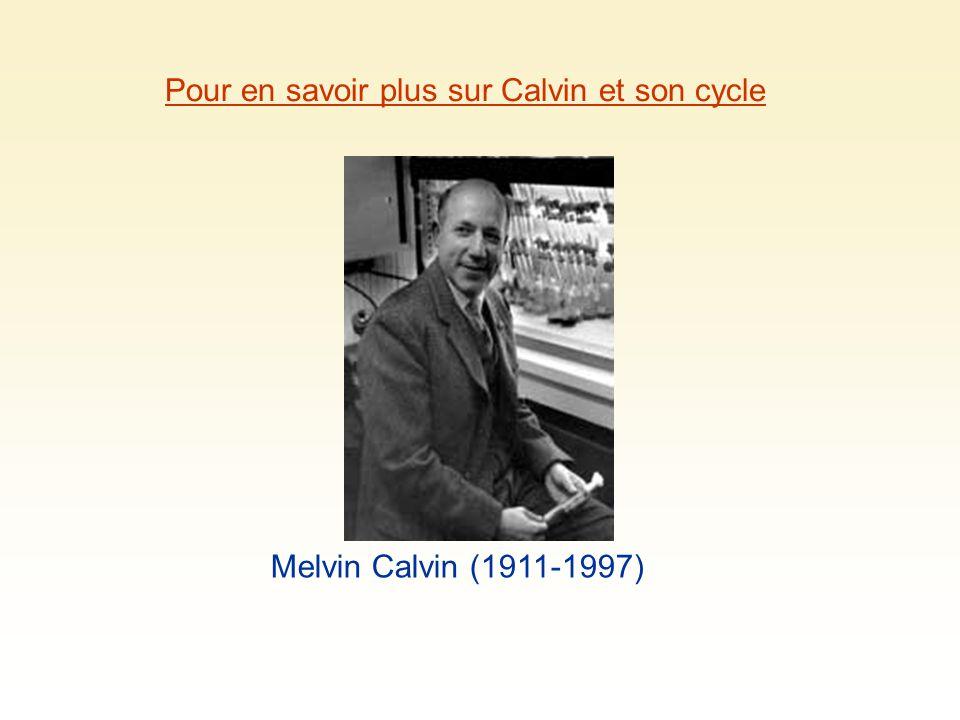 Pour en savoir plus sur Calvin et son cycle Melvin Calvin (1911-1997)