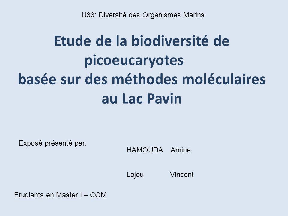 Etude de la biodiversité de picoeucaryotes basée sur des méthodes moléculaires au Lac Pavin Exposé présenté par: HAMOUDA Amine Lojou Vincent Etudiants