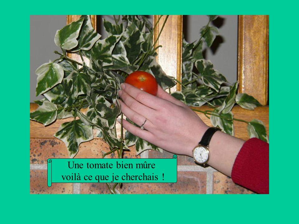 Une tomate bien mûre voilà ce que je cherchais !