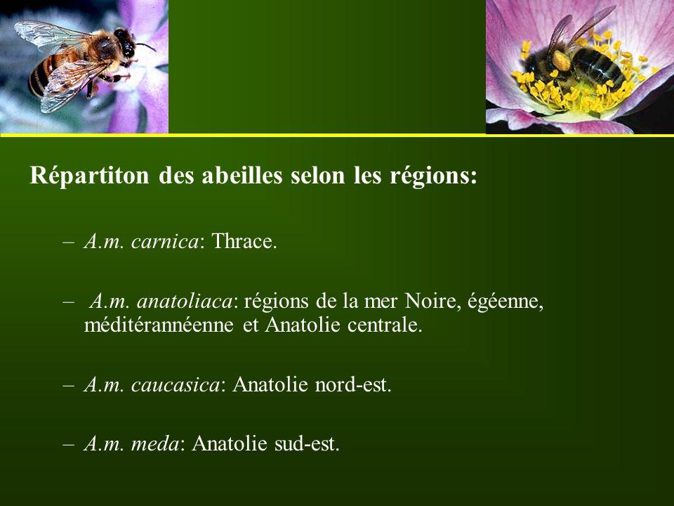 Répartiton des abeilles selon les régions: –A.m. carnica: Thrace. – A.m. anatoliaca: régions de la mer Noire, égéenne, méditérannéenne et Anatolie cen