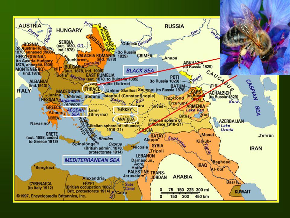 2.5 2.O 1.5 1.0 O.5 Mediterranean Aegean Central Anatolia Black Sea East Anatolia Thrace Southeast Anatolia Figure 6.