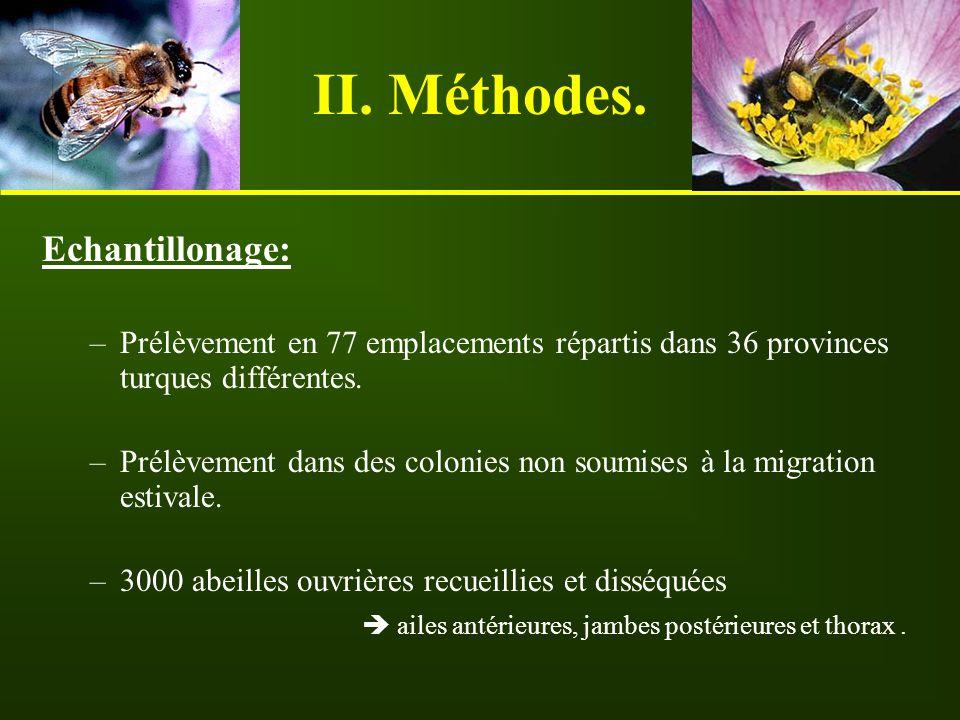 Méthodes morphométriques: Mesure et comparaison, entre eux et par régions, de 10 critères morphologiques : des ailes antérieures: Longueur et largeur.