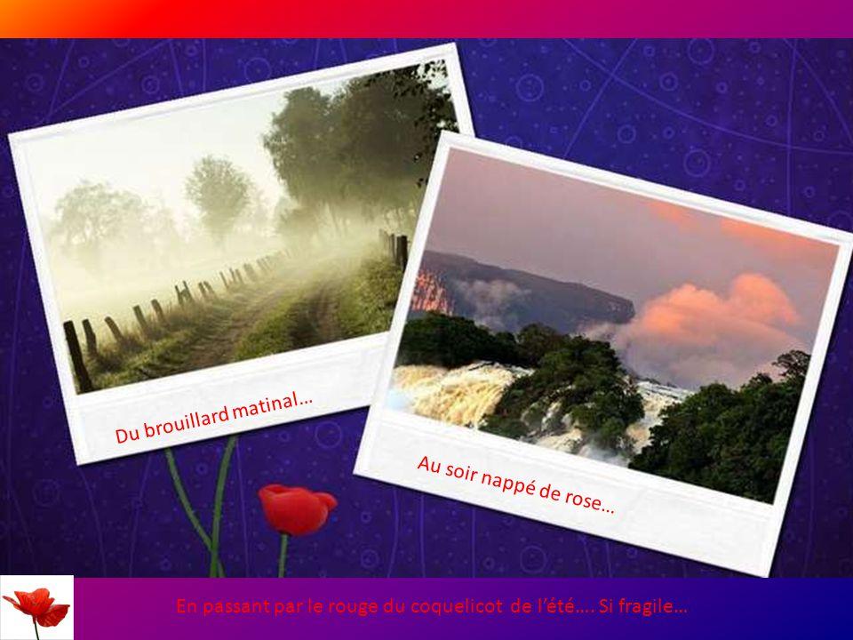 Du brouillard matinal… Au soir nappé de rose… En passant par le rouge du coquelicot de l'été….