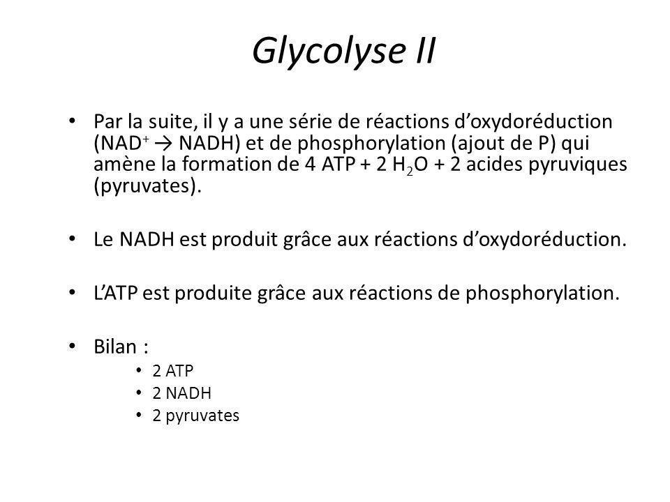 Glycolyse II Par la suite, il y a une série de réactions d'oxydoréduction (NAD + → NADH) et de phosphorylation (ajout de P) qui amène la formation de