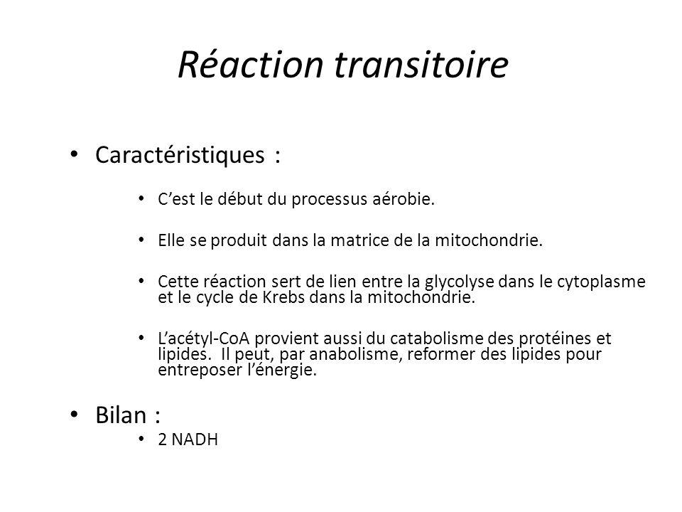 Réaction transitoire Caractéristiques : C'est le début du processus aérobie. Elle se produit dans la matrice de la mitochondrie. Cette réaction sert d