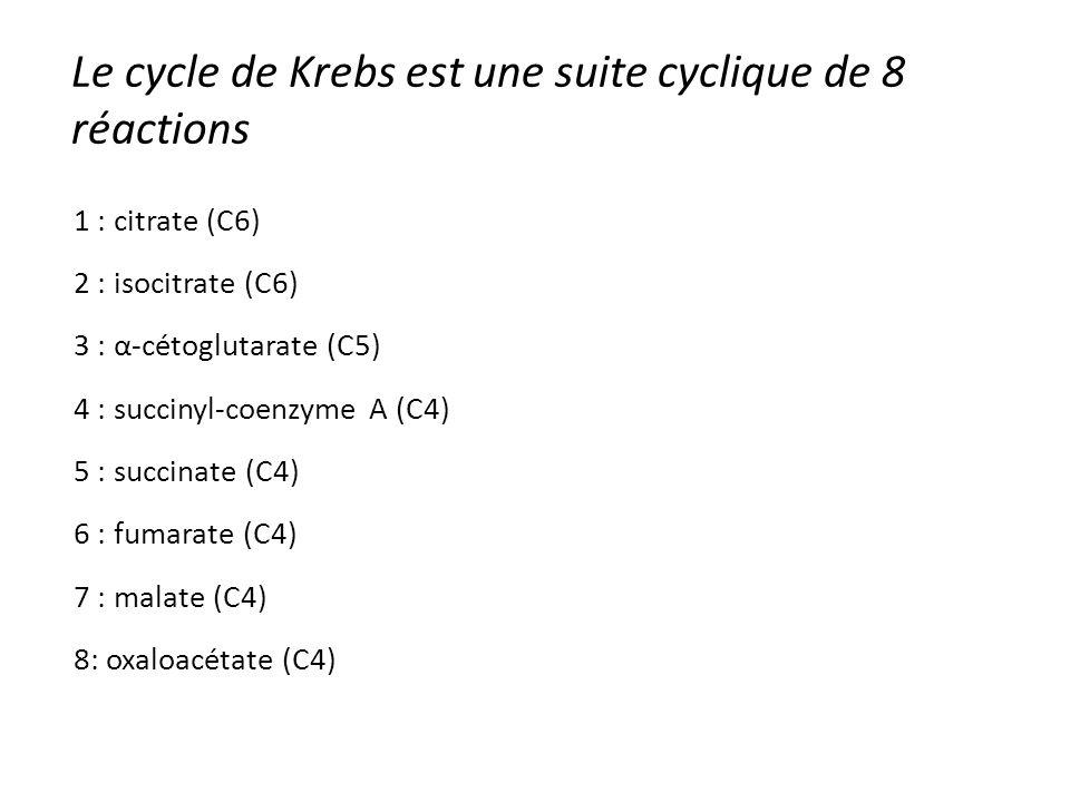 Le cycle de Krebs est une suite cyclique de 8 réactions 1 : citrate (C6) 2 : isocitrate (C6) 3 : α-cétoglutarate (C5) 4 : succinyl-coenzyme A (C4) 5 :