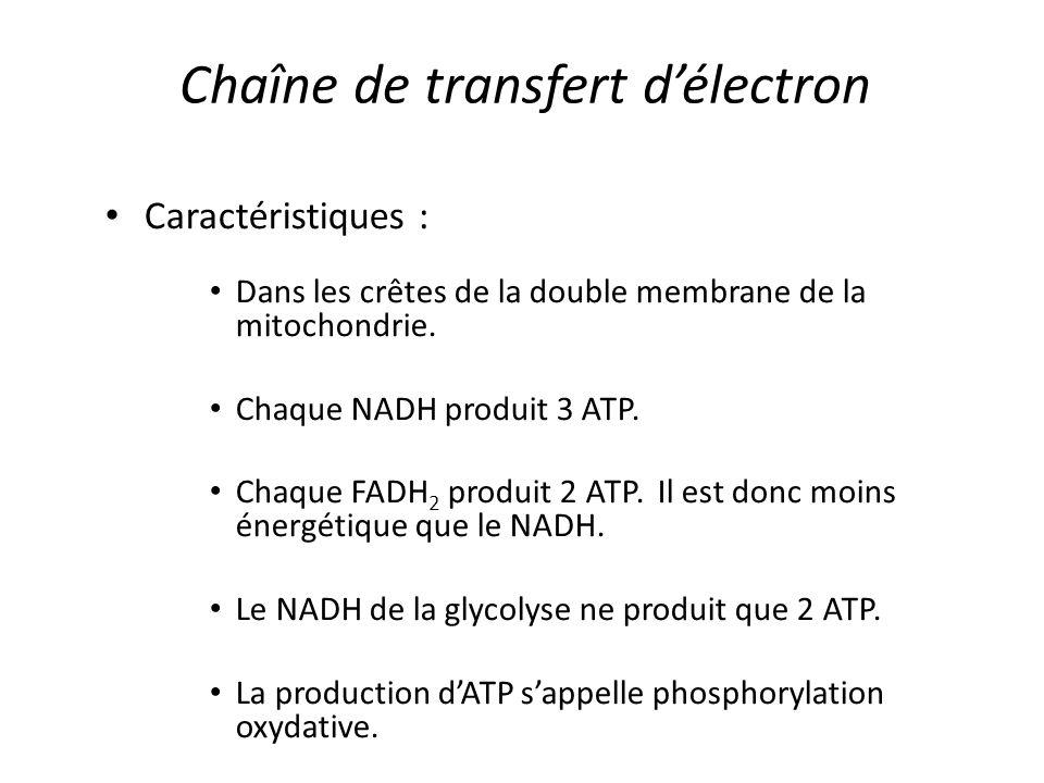 Chaîne de transfert d'électron Caractéristiques : Dans les crêtes de la double membrane de la mitochondrie. Chaque NADH produit 3 ATP. Chaque FADH 2 p