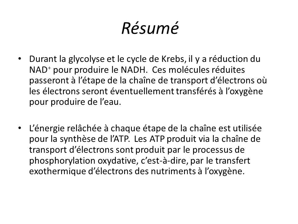 Résumé Durant la glycolyse et le cycle de Krebs, il y a réduction du NAD + pour produire le NADH. Ces molécules réduites passeront à l'étape de la cha
