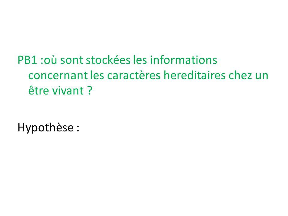 PB1 :où sont stockées les informations concernant les caractères hereditaires chez un être vivant ? Hypothèse :