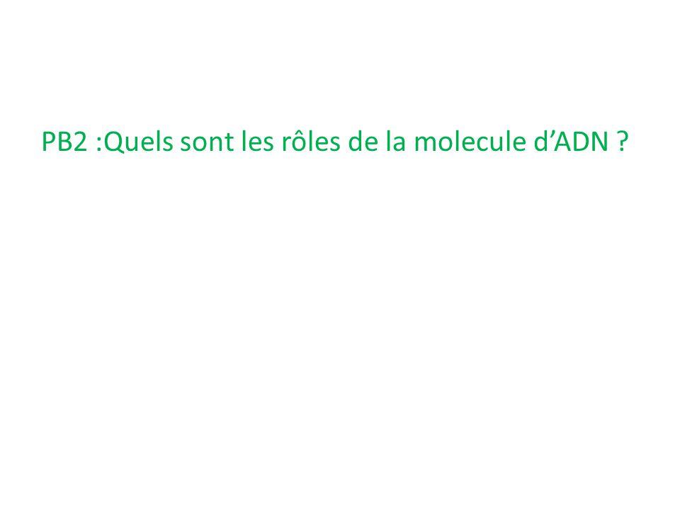 PB2 :Quels sont les rôles de la molecule d'ADN ?