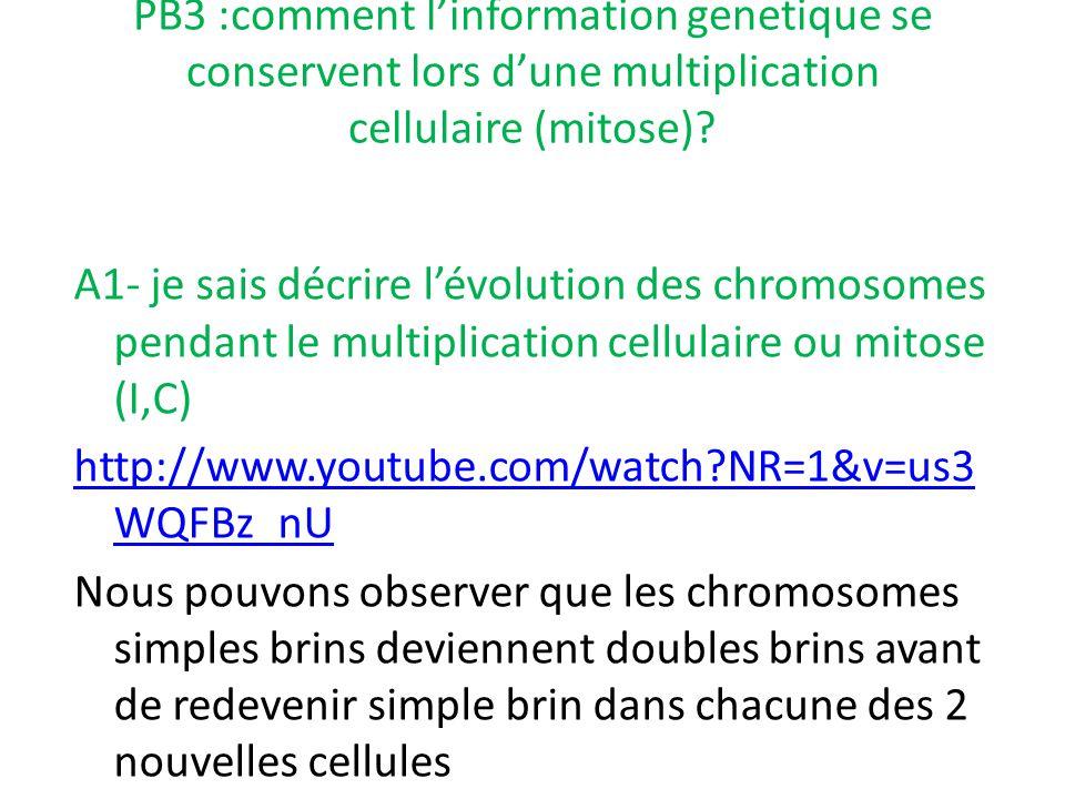 PB3 :comment l'information genetique se conservent lors d'une multiplication cellulaire (mitose)? A1- je sais décrire l'évolution des chromosomes pend