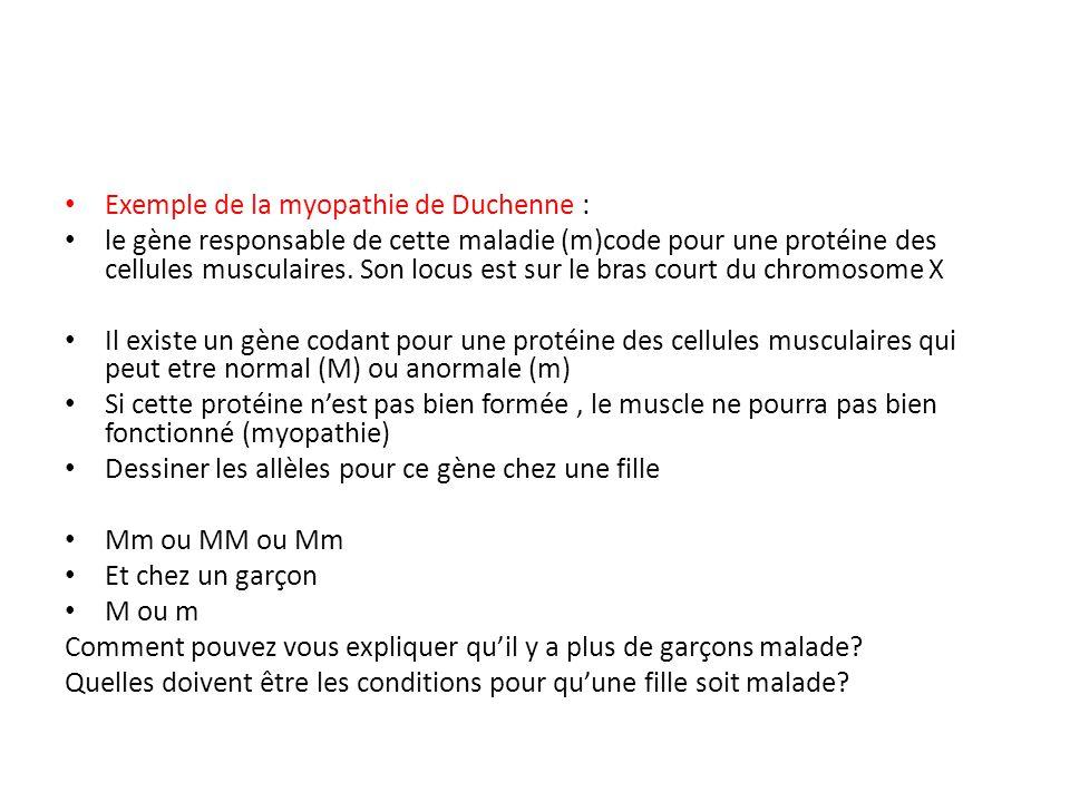 Exemple de la myopathie de Duchenne : le gène responsable de cette maladie (m)code pour une protéine des cellules musculaires. Son locus est sur le br