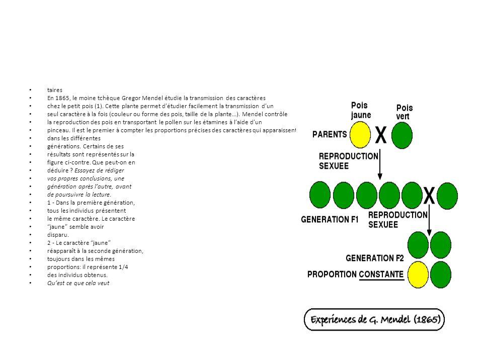 taires En 1865, le moine tchèque Gregor Mendel étudie la transmission des caractères chez le petit pois (1). Cette plante permet d'étudier facilement