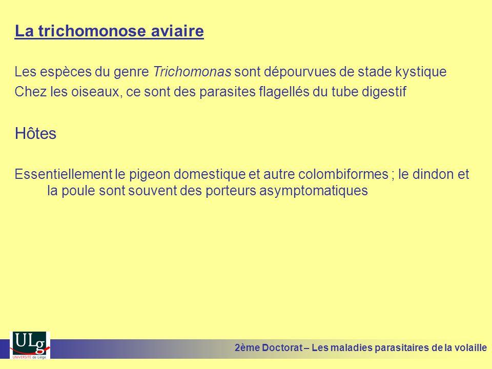 La trichomonose aviaire Les espèces du genre Trichomonas sont dépourvues de stade kystique Chez les oiseaux, ce sont des parasites flagellés du tube d