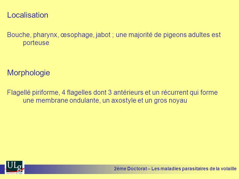 Localisation Bouche, pharynx, œsophage, jabot ; une majorité de pigeons adultes est porteuse Morphologie Flagellé piriforme, 4 flagelles dont 3 antéri