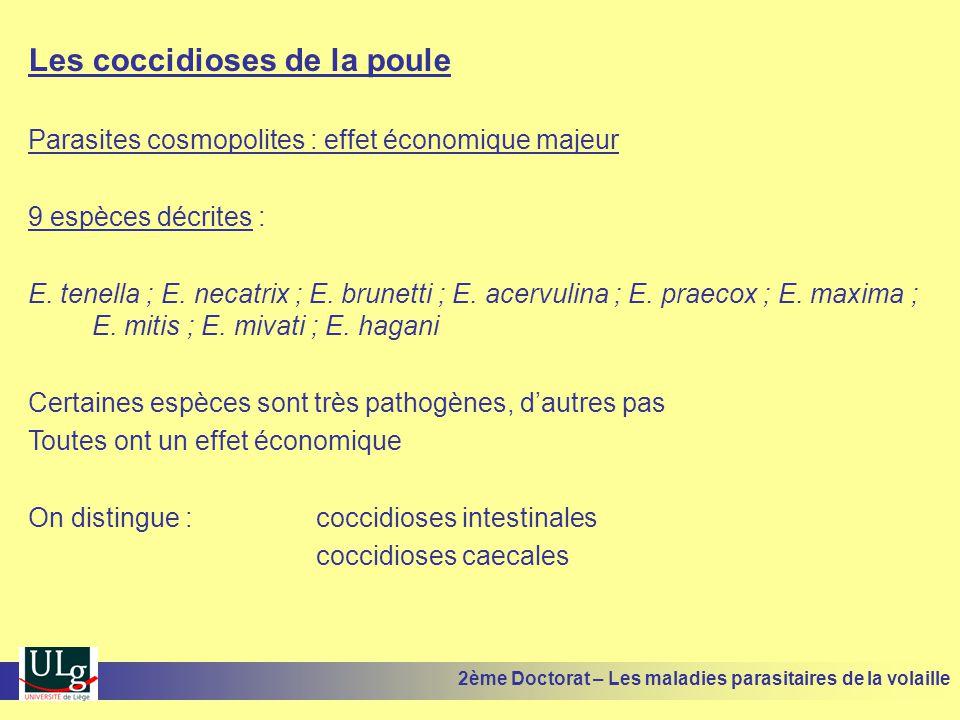 Les coccidioses de la poule Parasites cosmopolites : effet économique majeur 9 espèces décrites : E. tenella ; E. necatrix ; E. brunetti ; E. acervuli