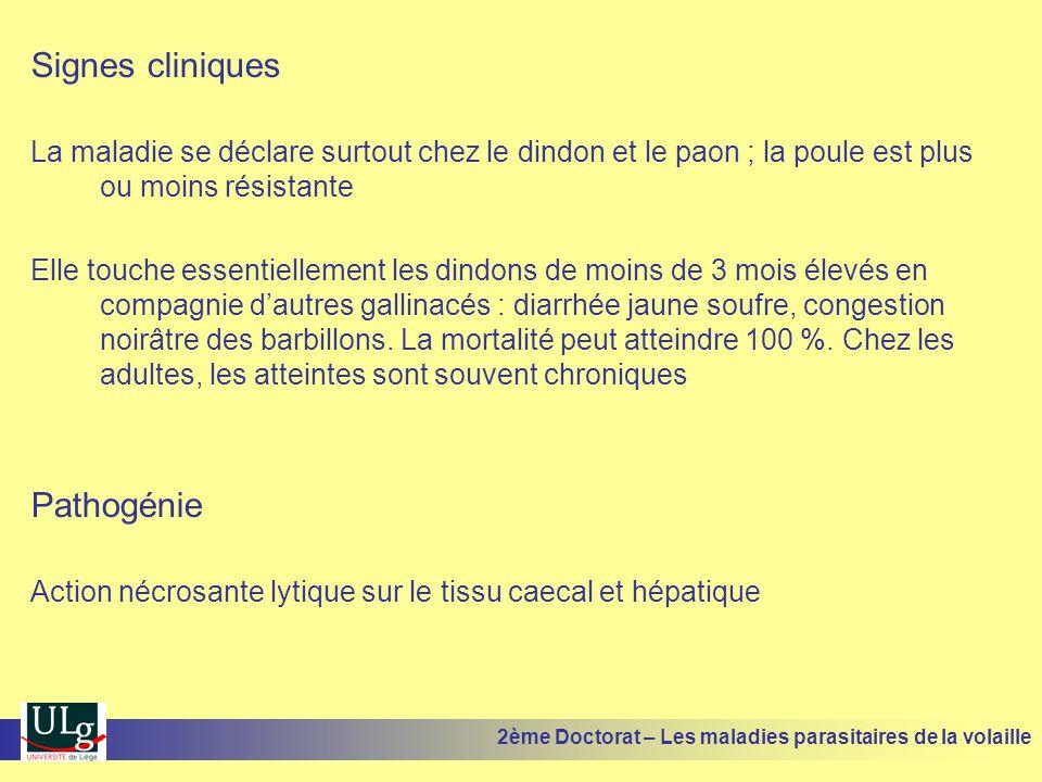 Signes cliniques La maladie se déclare surtout chez le dindon et le paon ; la poule est plus ou moins résistante Elle touche essentiellement les dindo
