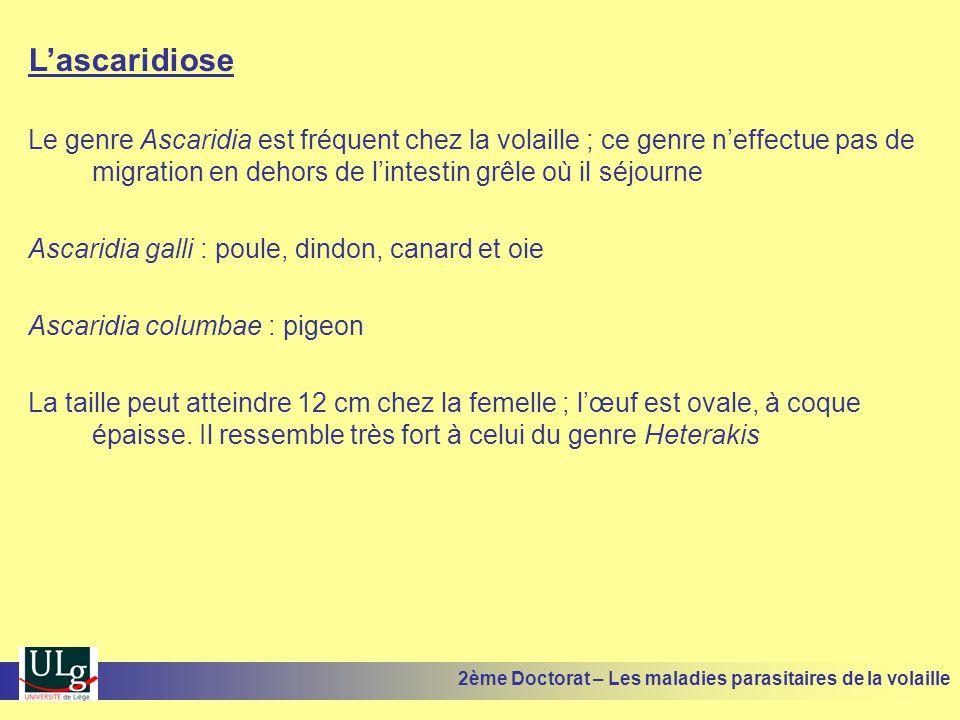 L'ascaridiose Le genre Ascaridia est fréquent chez la volaille ; ce genre n'effectue pas de migration en dehors de l'intestin grêle où il séjourne Asc